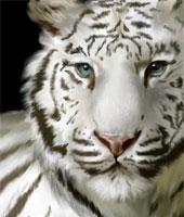 ...(только у ночьных эльфоф такие рисунки под глазами) а сверху портрет моего животного белого тигра кина.