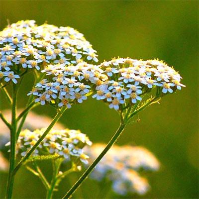 Препараты из трав и растений