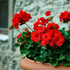 Цветы в спальне. Какие можно и какие цветы нельзя выращивать в спальне