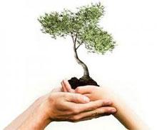 Всероссийский день посадки леса