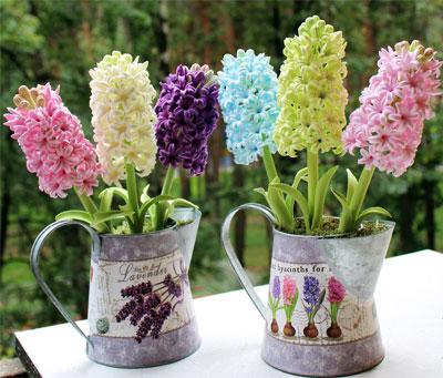 http://www.inmoment.ru/img/hyacinth1.jpg