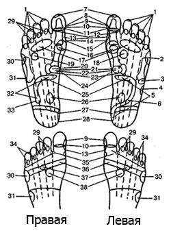 индийский массаж стоп: Топография рефлексогенных зон на подошве ног человека