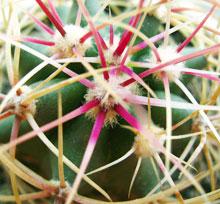 И свойства комнатных растений цветов