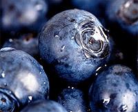 черника снижает холестерин