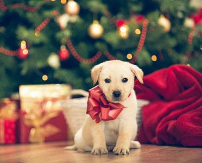 подарки в 2018 год Желтой Собаки