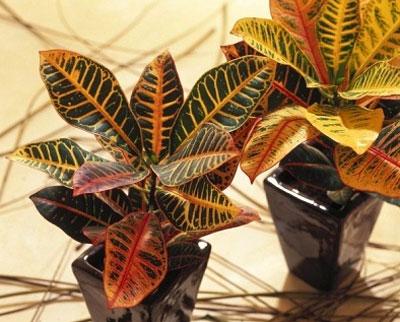 Дикорастущие растения съедобные и лекарственные травы из