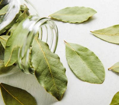 Похудение с помощью лаврового листа (отзывы, рецепты), лавровый лист и корица для похудения отзывы.