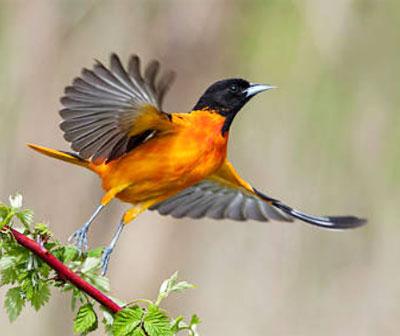 Доклад международный день птиц 5738