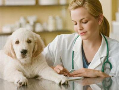 Когда день ветеринарного работника в 2018 году