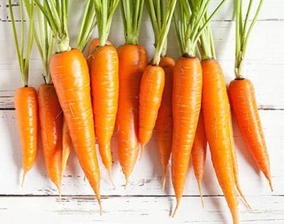 Полезные свойства столовой моркови - описание, размножение, уход, посадка, фото, применение в саду, сорта и виды