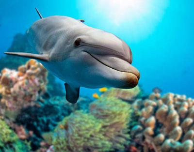 Всемирный день дикой природы - отмечается 3 марта