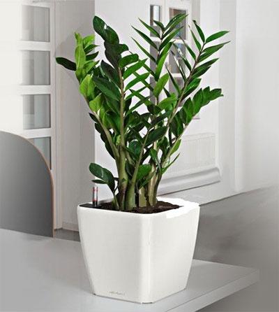Уход в домашних условиях за растениями 38